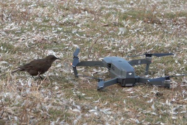 Mavic  tournage drone HQPilots